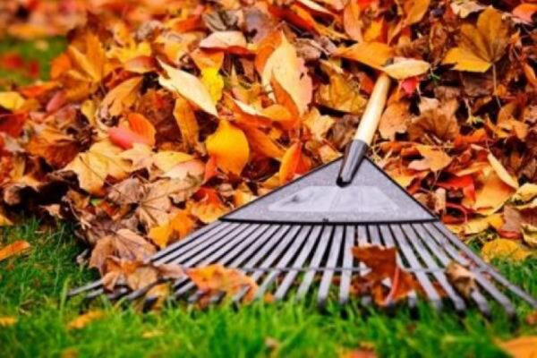 picture of leaves with rake