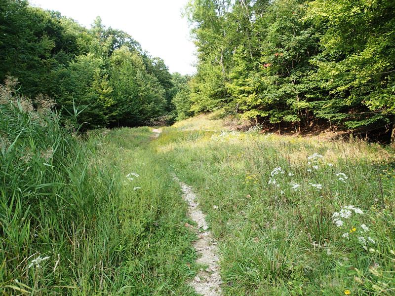 Baldwin Creek Preserve property in Middleburg Heights