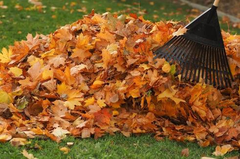 Middleburg Heights Leaf Pick Up