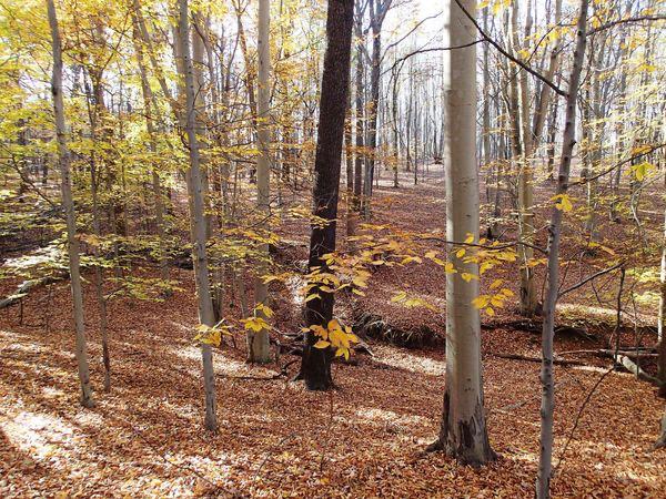 Baldwin Creek Preserve